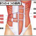 腹筋のインナーマッスルとは腹横筋と内腹斜筋