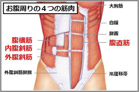 お腹痩せに即効性のある筋肉がインナーマッスル