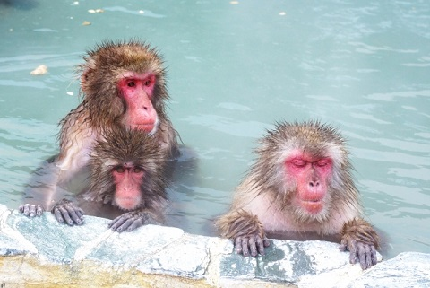 インフルエンザは熱めのお風呂に入って予防する
