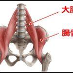 重要なインナーマッスルの大腰筋と腸骨筋