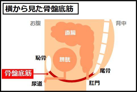 胃下垂の治し方は骨盤底筋を強化することがキモ