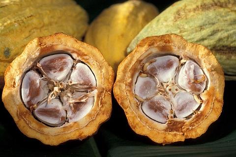 チョコレートの健康効果はじつは発酵食品だから
