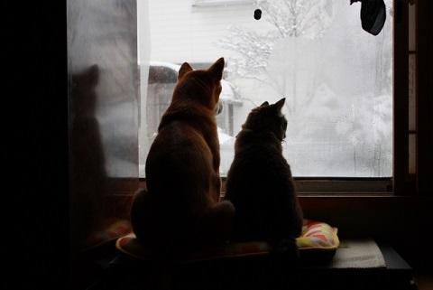 猫背の原因は肩甲骨と背骨をつなぐ菱形筋の衰え