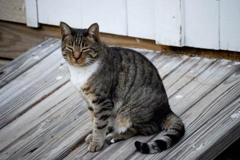 菱形筋を鍛えることが猫背を治す方法だった