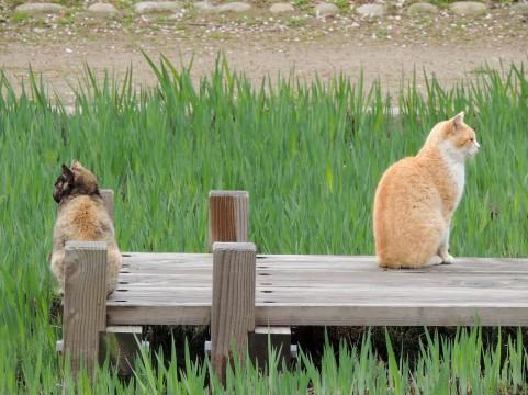 猫背の肩こりを解消するゆがみリセット方法
