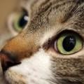1回10秒!老眼を予防する目のエクササイズ