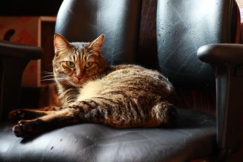 大腰筋の鍛え方は椅子の座り方を工夫するだけ