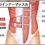 体幹のインナーマッスルは腹横筋と腹斜筋