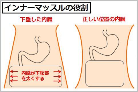 胃下垂の治し方はインナーマッスルの腹横筋が鍵