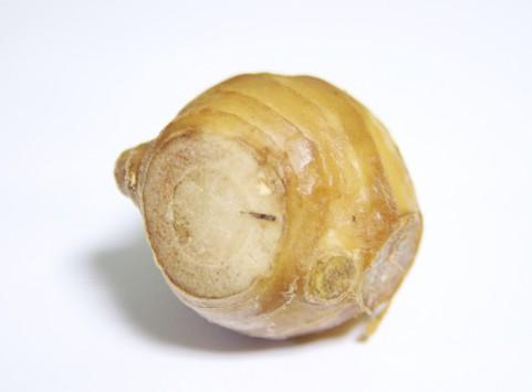 生姜の効能は千年以上も前から認識されていた