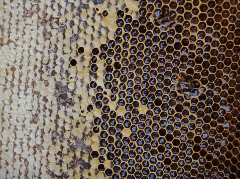 口内炎にはハチミツを塗ると治りが早くなる