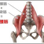 腸腰筋はつまずき防止インナーマッスル