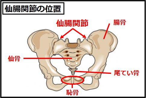 仙腸関節を自分で調整して腰痛を改善する方法