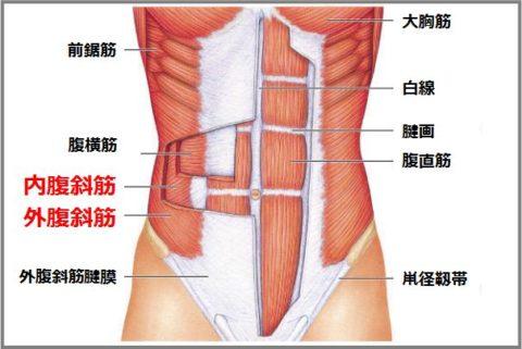 腹斜筋の筋トレで体のゆがみを治してダイエット