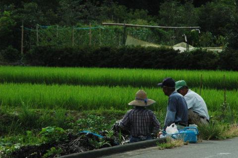 癌に効く食べ物「クレソン」は道志村で作られる
