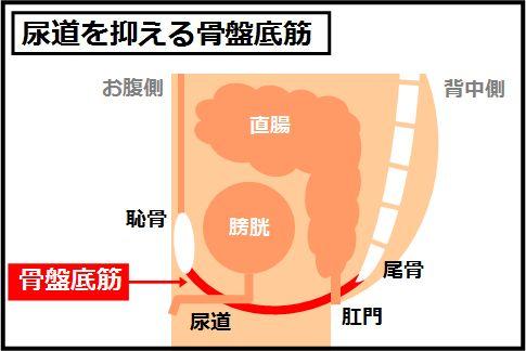 尿漏れ予防になる骨盤底筋の鍛え方