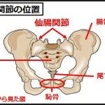 仙腸関節の位置