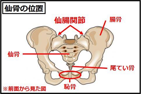 腰痛の原因「仙骨」の正常な角度