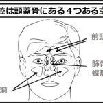 副鼻腔は頭蓋骨にある4つの空洞