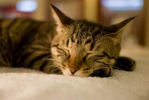 慢性鼻炎になると睡眠中だけ鼻づまりをおこす