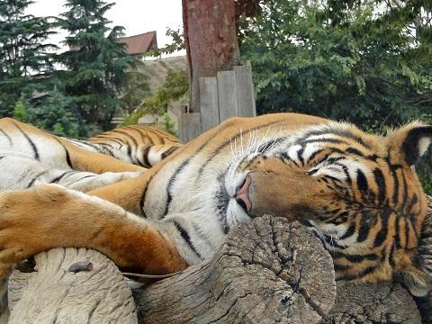 夏の暑い夜でもよく眠れる方法は深部体温がカギ