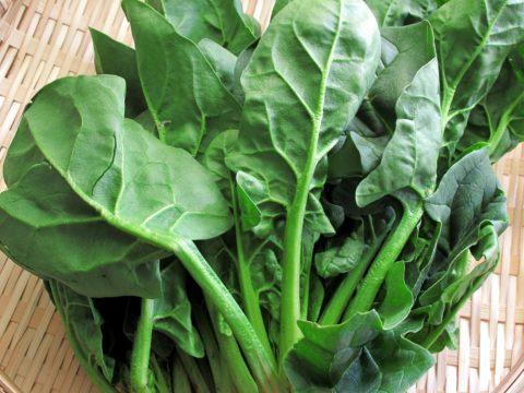 ポリフェノール効果が一番高い野菜はホウレン草
