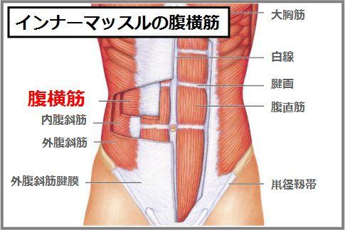 内臓下垂の治し方には腹横筋