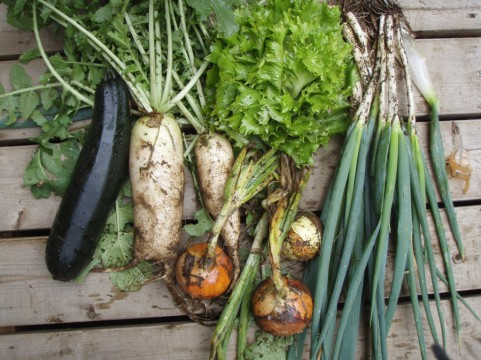 子供が野菜を嫌いなのは生物学的な理由があった